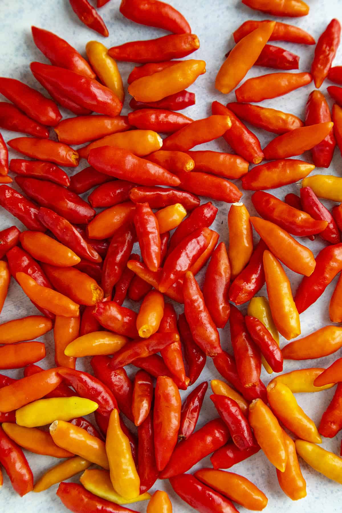 tabasco chili peppers